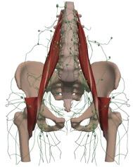 lymphatic-system